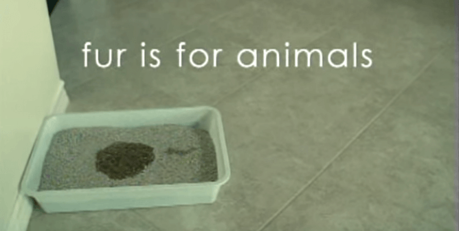 Fur Is for Animals: Litterbox