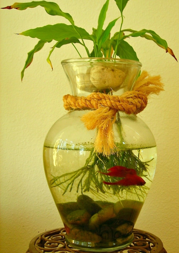 Tiny Fish Tanks Mean Enormous Suffering Peta