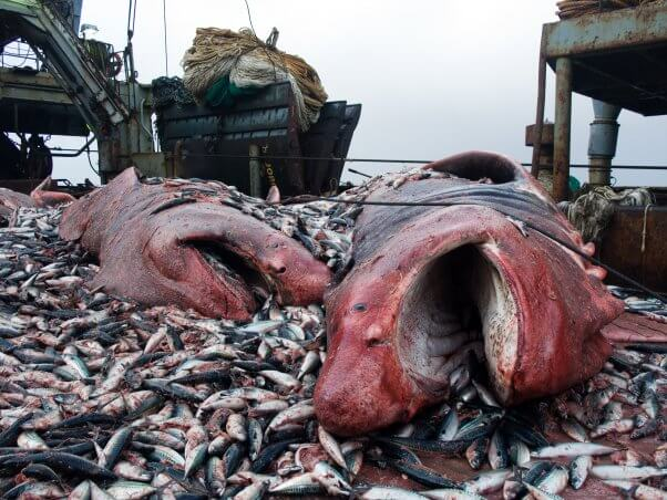 what is bycatch?