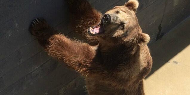 Cherokee Bear Zoo