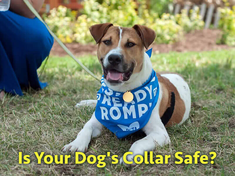 Is Your Dog's Collar Dangerous?