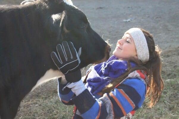 essay on my pet animal cow