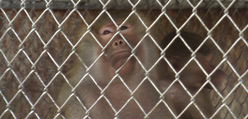 Waccatee Zoo Heartbreaking Primate