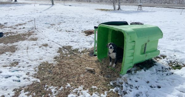 """dog left outdoors during winter storm with an insufficient rubbish bin for """"shelter"""""""