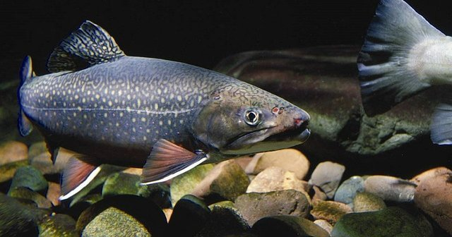 Animal Rights Uncompromised: Catch-and-Release Fishing
