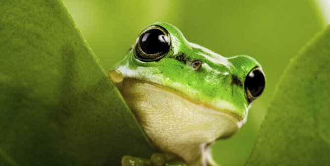 Five Cruelty-Free Ways to Keep Frogs in Your Home