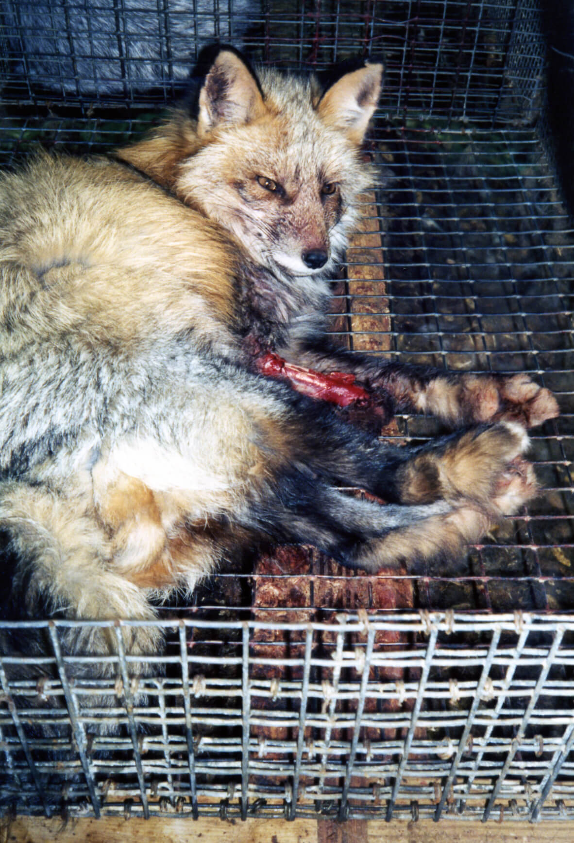Animals Used for Fur | PETA