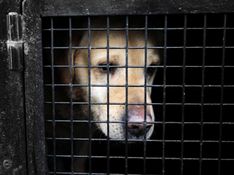 Non kill shelters sending animals away to be euthanized! research paper and need info?