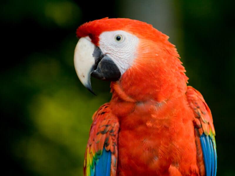 Exotic Animals as 'Pets' | PETA