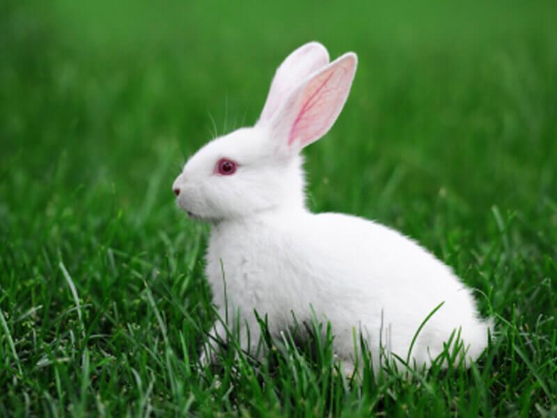 Resultado de imagen de rabbit