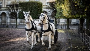 The Cruelty of Horse-Drawn Carriages