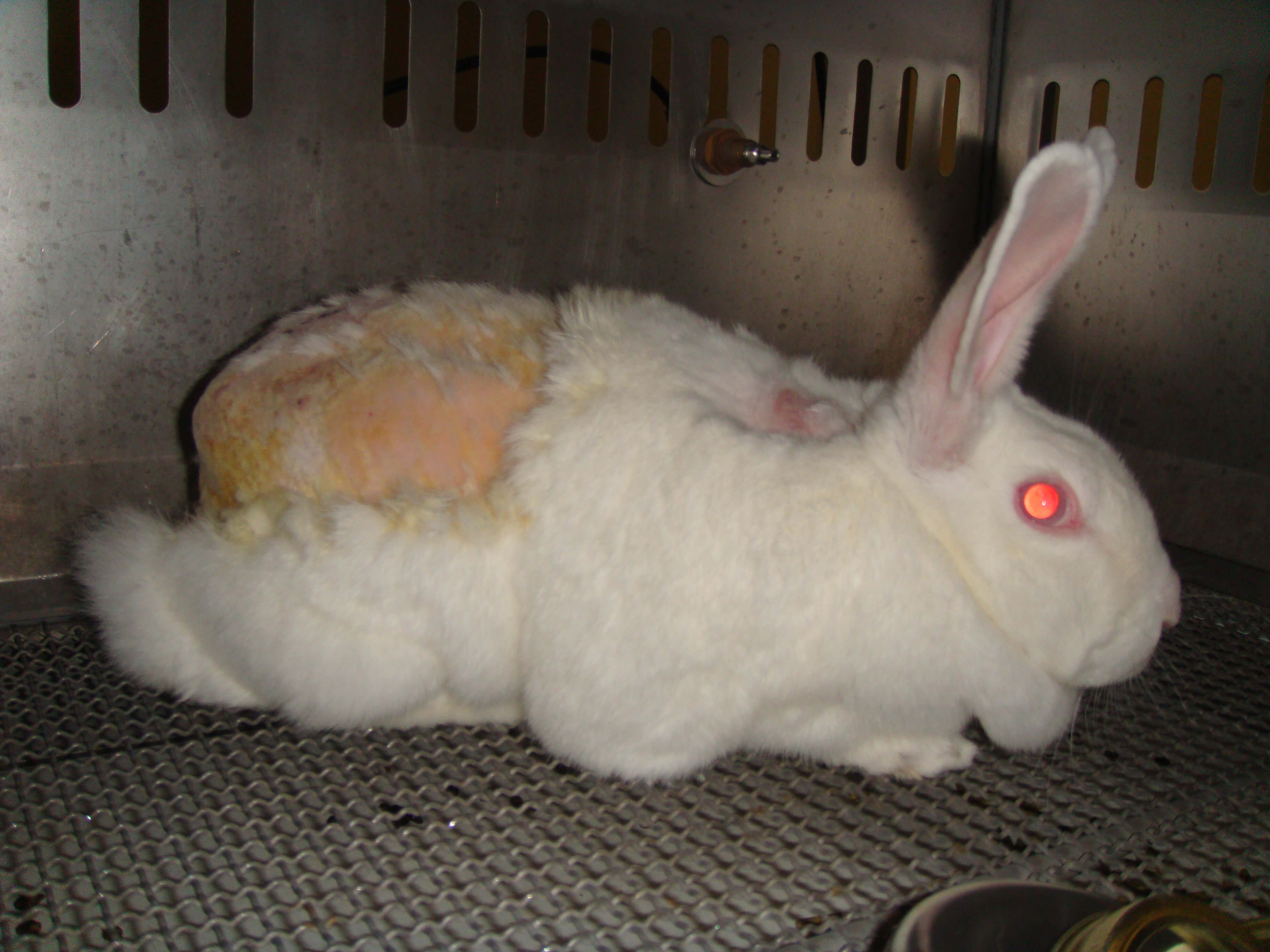 animal testing is bad science point counterpoint peta
