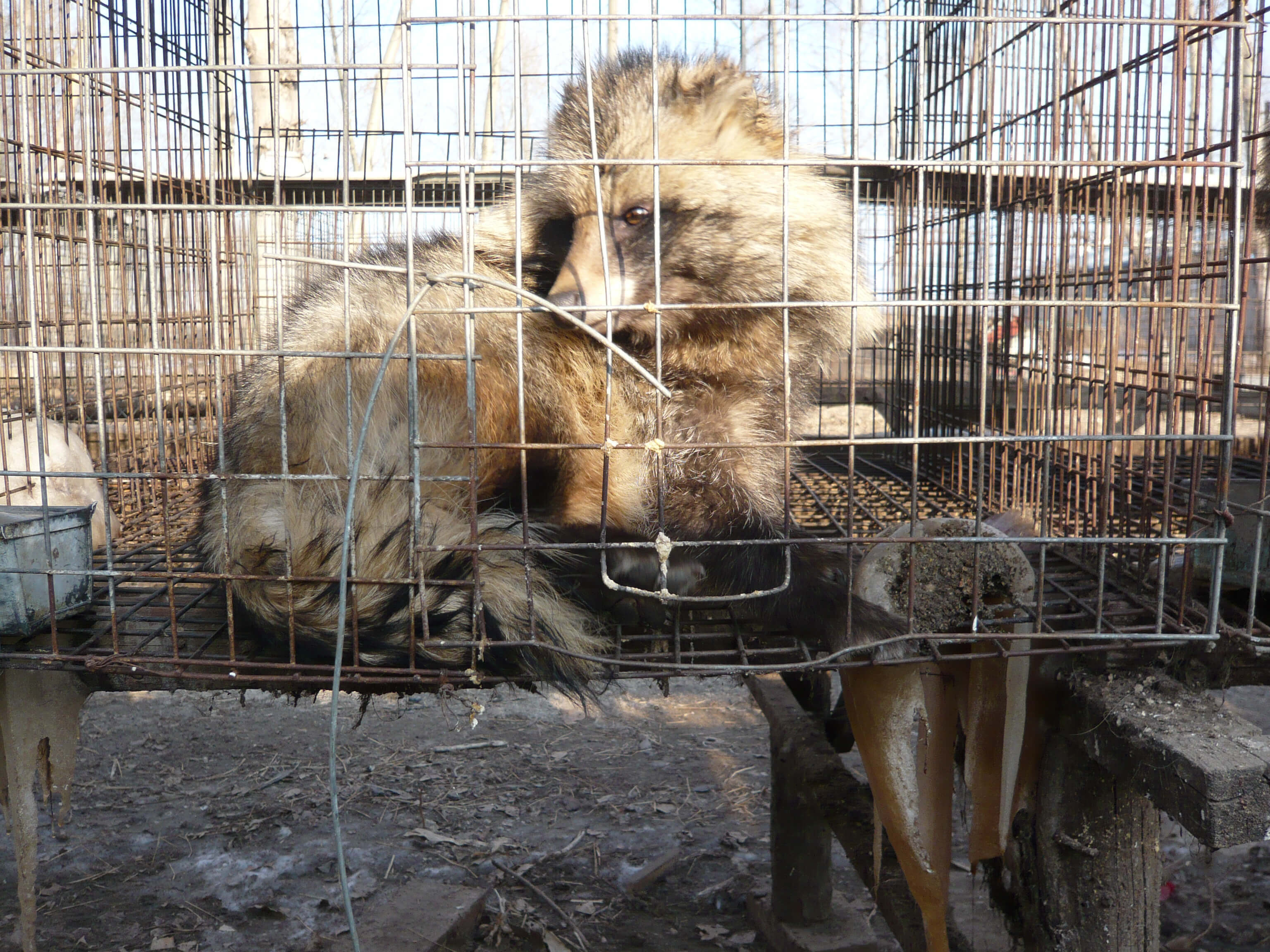 Fur Farms The Fur Industry Animals Used For Clothing