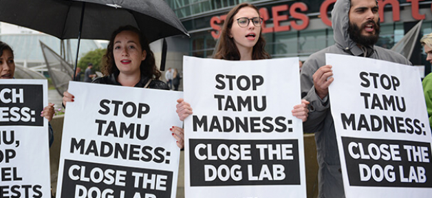 peta protest lunes dies texas a&m dog lab