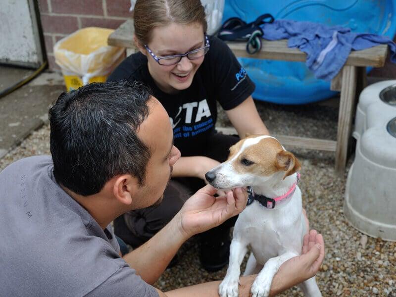 Volunteer at PETA