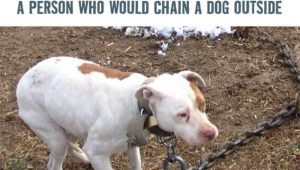 Cold: A Person Who Would Chain a Dog Outside