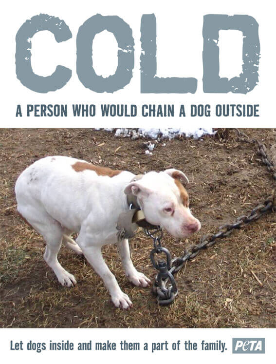 COLD: A PERSON WHO WOULD CHAIN A DOG OUTSIDE PSA
