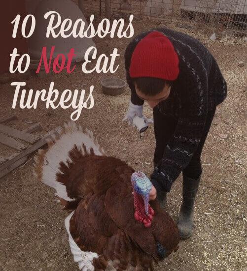 PETALiving-social-10-reasons-to-not-eat-turkeys-v1