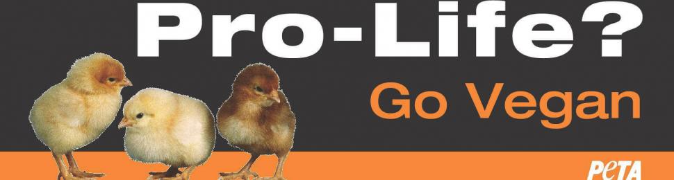 Pro-Life? Go Vegan