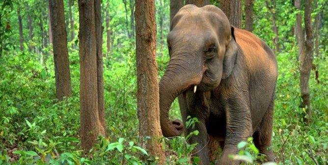 Great News! The U.K.'s Largest Travel Association Outlaws Elephant Interaction