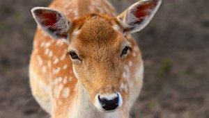 Wildlife Factsheets
