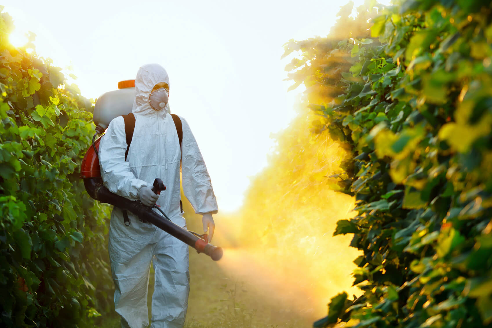 Image result for Alternative to synthetic pesticides