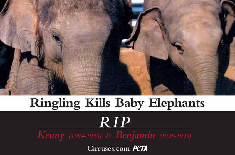 ringling-kills-baby-elephants-psa