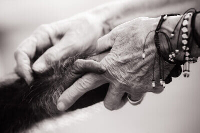 Chimpanzee and Human Holding Hands