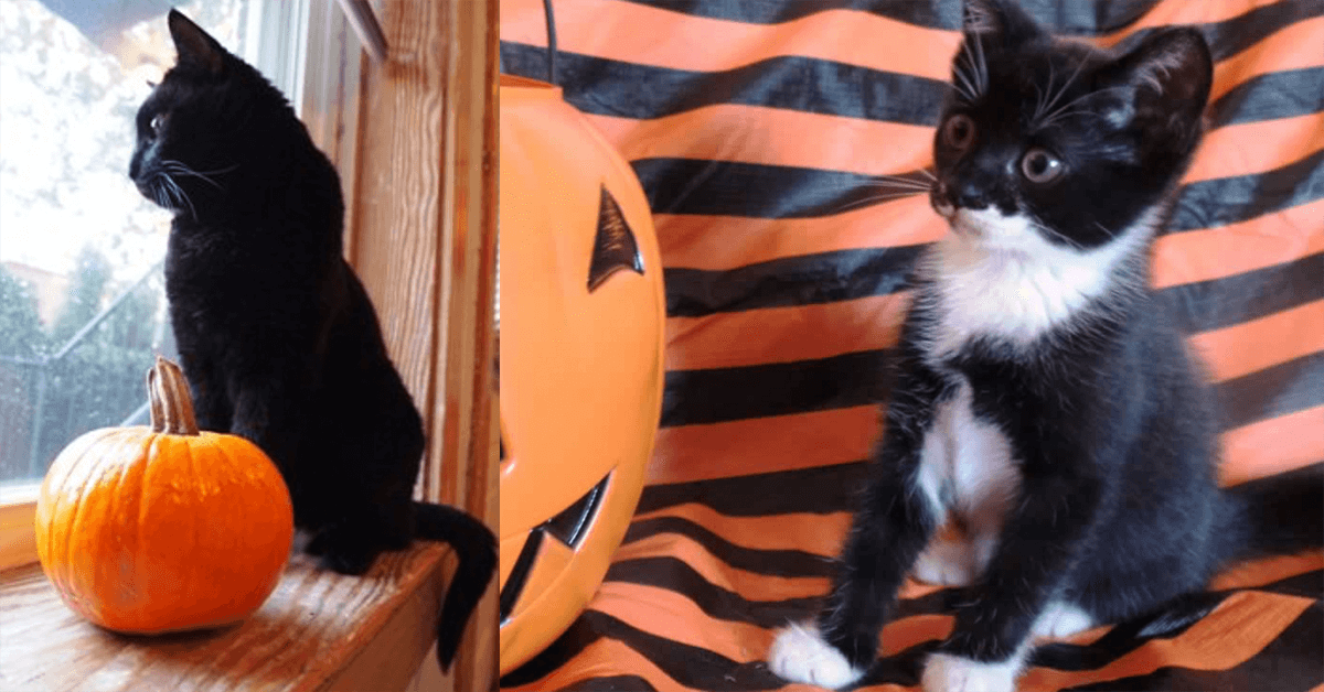 keep your animals safe and happy this halloween peta