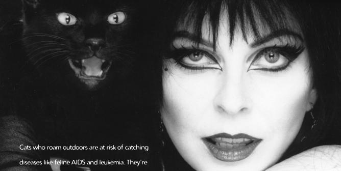 Elvira: Halloween Cat Safety