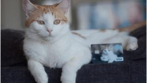 Help Animals and Melt ♥'s With the PETA Visa Rewards Credit Card