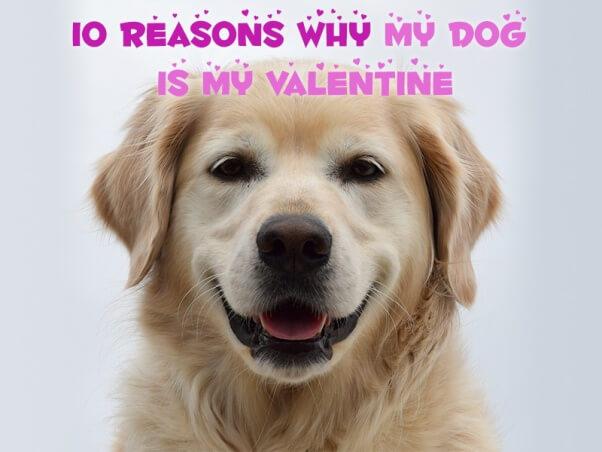 PETA Social 10 Reasons My Dog Is My