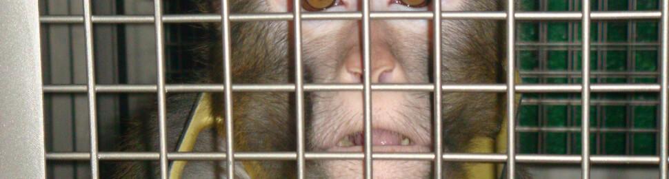 primate frik lab