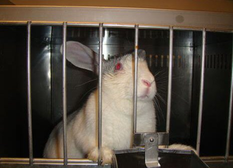 Animals Don't Belong in Labs