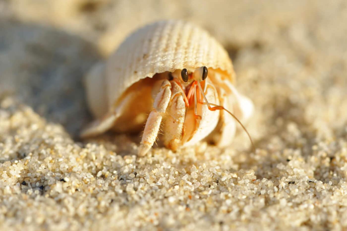 Urge Myrtle Beach Stores to Ditch Hermit Crab Sales