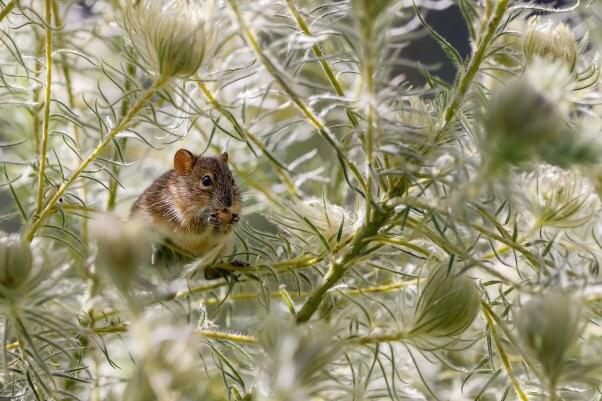 mouse in plants outdoors