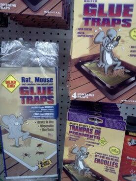 How Glue Traps Ruined My Childhood | PETA