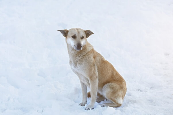 Cold stray dog snow dog frozen