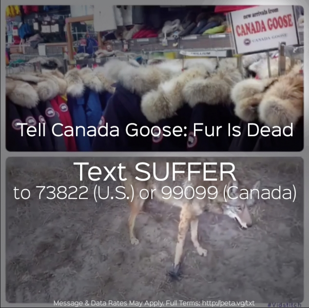 CanadaGoose-SUFFER