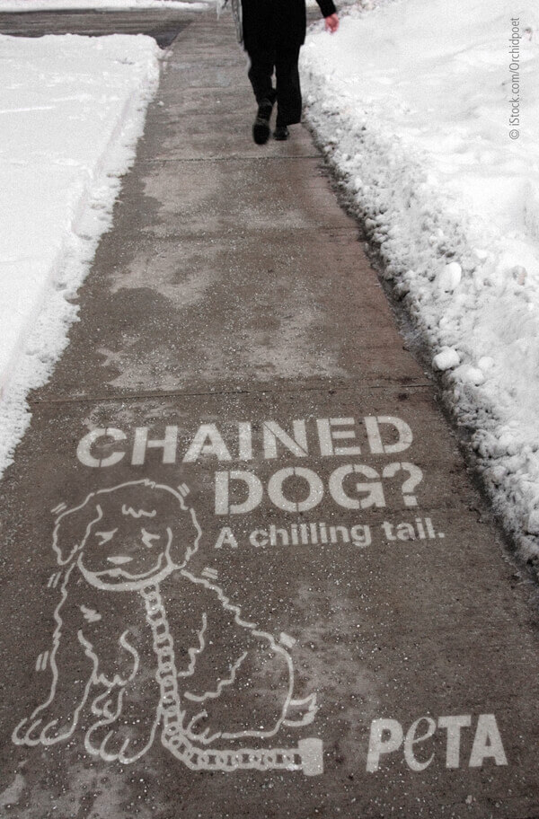Chained Dog? A Chilling Tail (Sidewalk Stencil) PSA