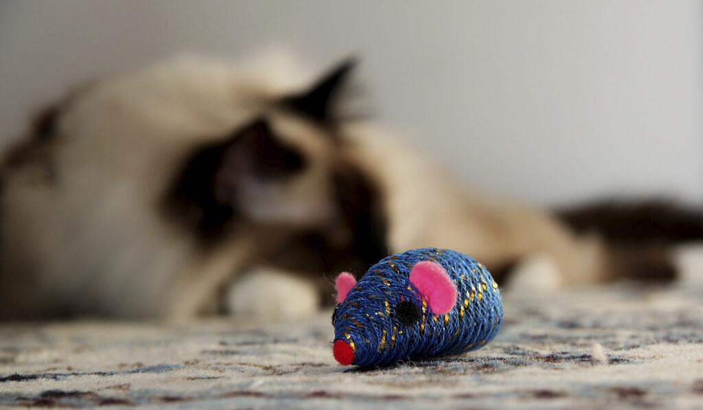 catnip toy cat background