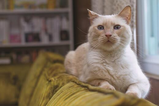 Romeo, Rescued Cat