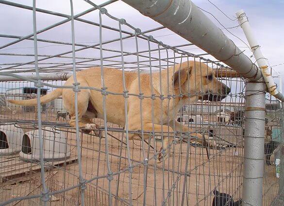 No-Kill' Policies Slowly Killing Animals | PETA