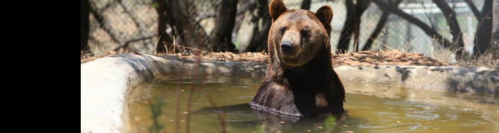 Ben the Bear: