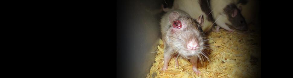 Global Captive Breeders Investigation