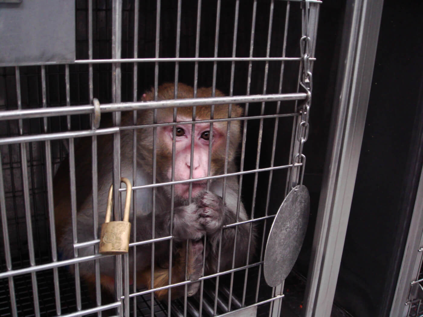Air France: Stop Shipping Monkeys to Labs for COVID-19 or Any Other Reason