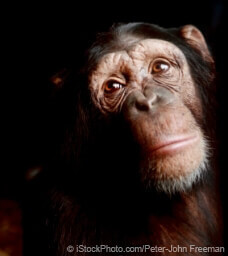 Tell The Ticket Clinic to Drop Its Cruel Chimpanzee Ad
