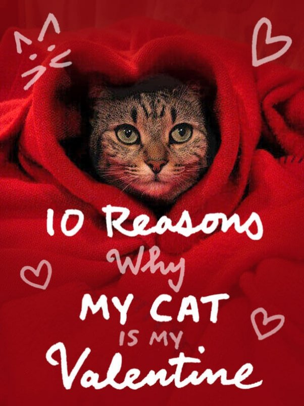 peta-living-cat-valentine-graphic-v1