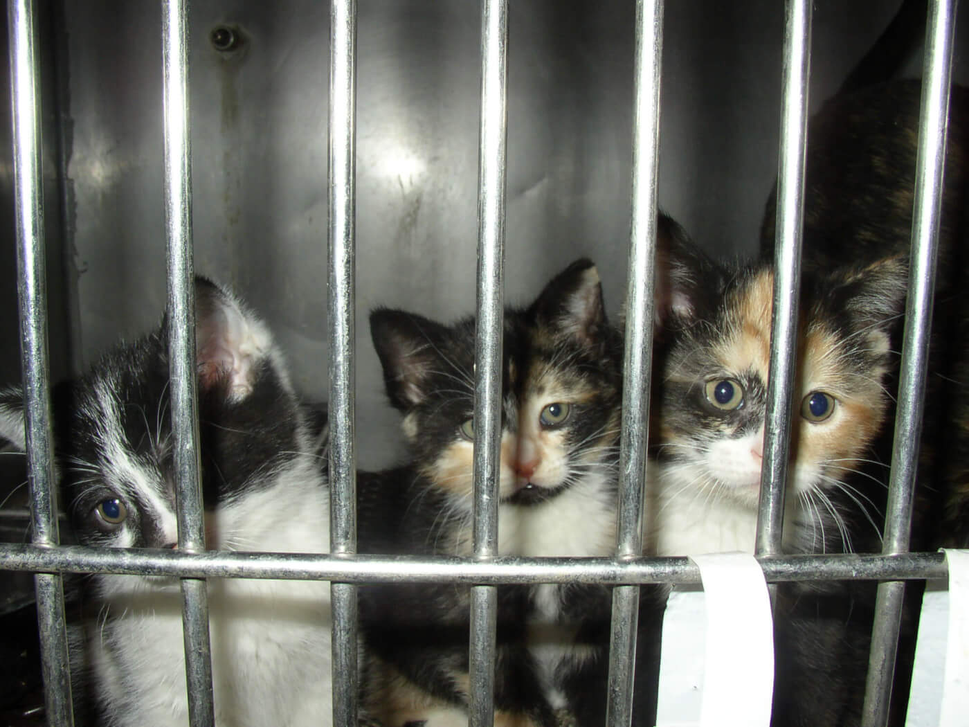 Turned Away A Closer Look at No Kill Animal Shelters