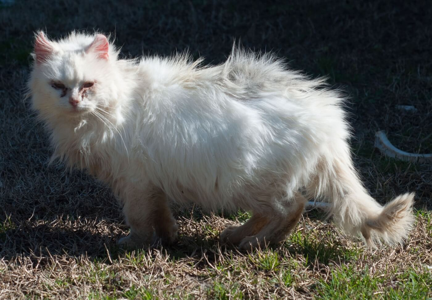 Animal Rights Uncompromised: Feral Cats